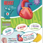 Heart facts